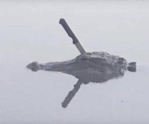 قصة تمساح أثار الرعب في «تكساس»