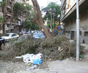 «بوظ شجرة».. هيئة نظافة وتجميل الجيزة تخالف تعاليم الابتدائية (صور)