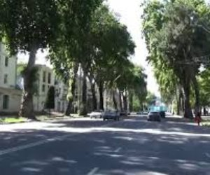 بعد تكرار «مذابح الأشجار».. ازرع شجرة تنقذ الملايين من الموت