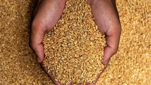 بسبب «الإرجوت».. موظفو الزراعة يقاضون رئيس الوزراء