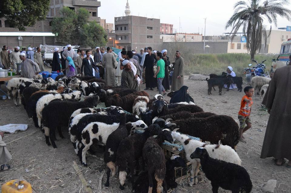 الأهالي يتوافدون علي سوق المواشي قبل ليلة العيد (3)