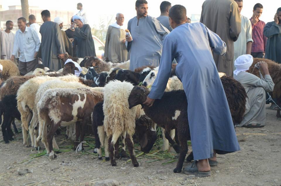 الأهالي يتوافدون علي سوق المواشي قبل ليلة العيد (5)