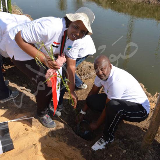 مشروع زراعة أشجار البامبو بجسور المصارف (4)
