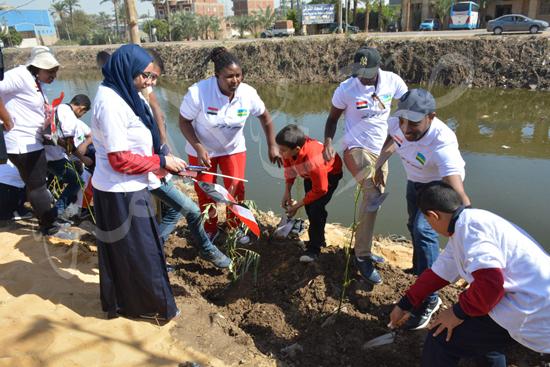 مشروع زراعة أشجار البامبو بجسور المصارف (3)
