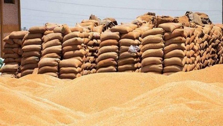 مشكلة توريد القمح سنويا سببا فى العزوف عن زراعته