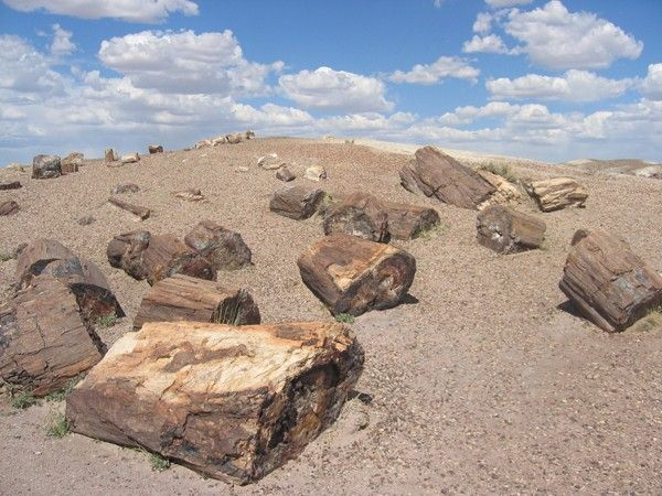 Petrified_Forest_National_Park_Wood