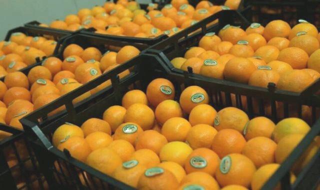 تصدير البرتقال