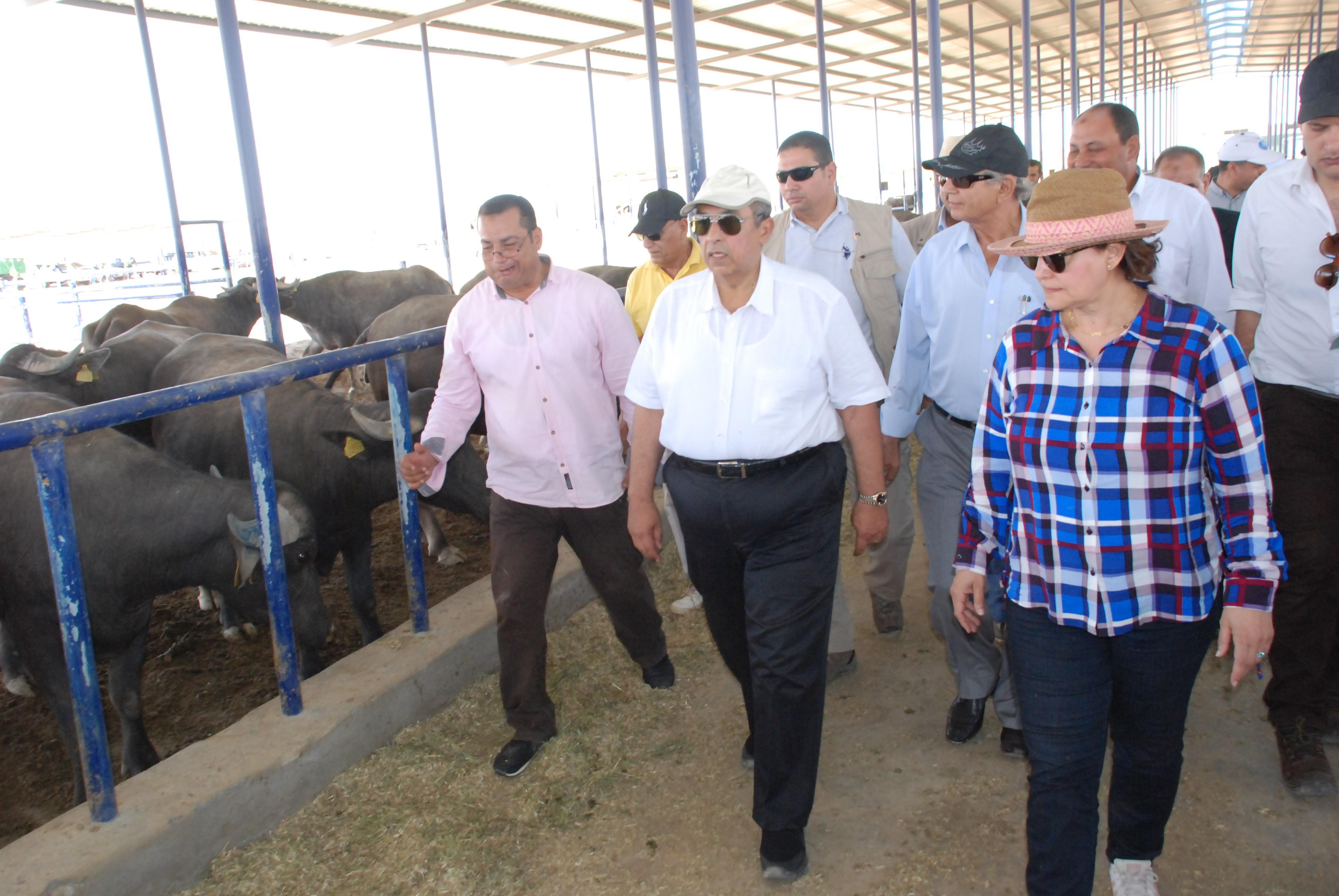 899525-جولة-وزير-الزراعة-بمزراع--الماشية