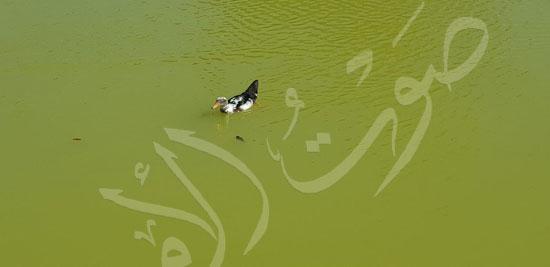 حدائق الشلالات بالإسكندرية (3)