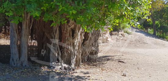 حدائق الشلالات بالإسكندرية (8)