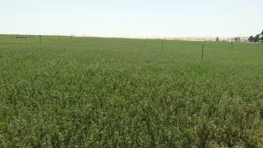 167364-محطة-البحوث-الزراعية-بشرق-القناة-تساهم-في--التنمية-المستدامة--(1)