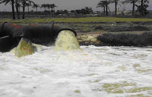 التلوث الصناعى يقضى على الأحياء المائية بالنيل
