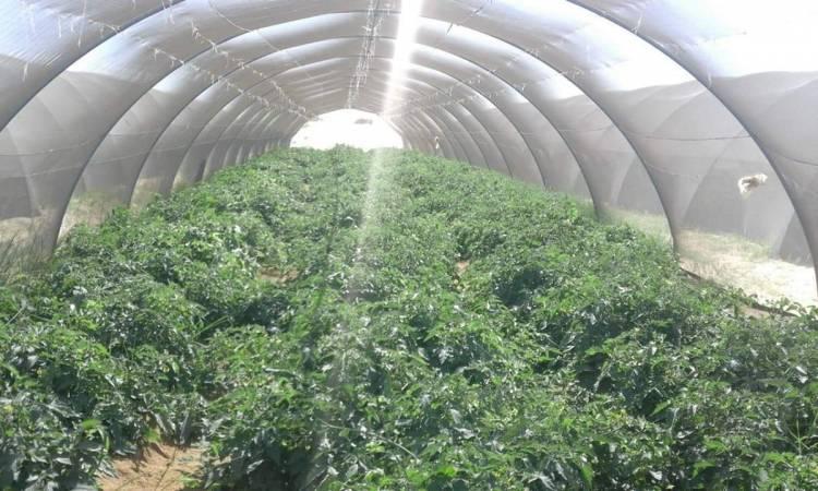 صوب زراعية لوقاية المحاصيل