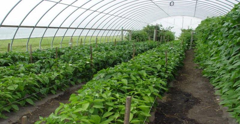 الصوبات الزراعية