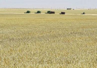 القمح فى مشروع غرب غرب المنيا