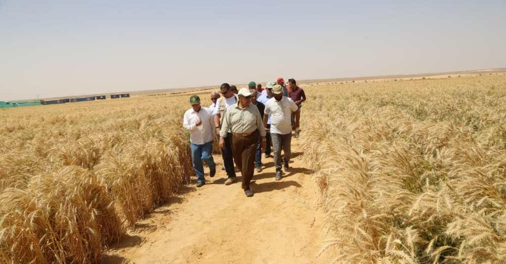 زراعة وحصاد القمح فى مشروع غرب المنيا