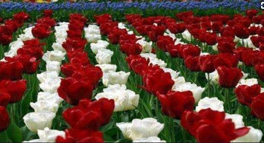 ورود وزهور مصرية