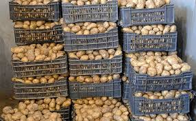 تصدير البطاطس