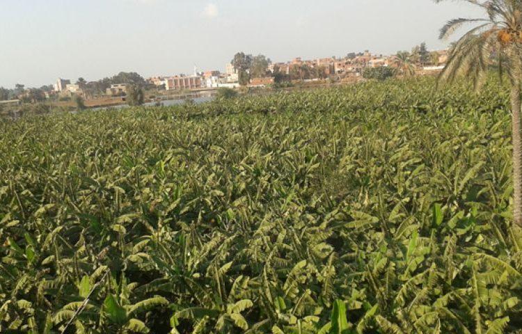 تزايد مساحات الزراعات العضوية