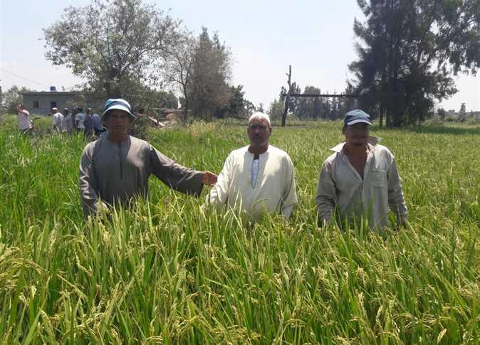 زراعات عضوية مصرية