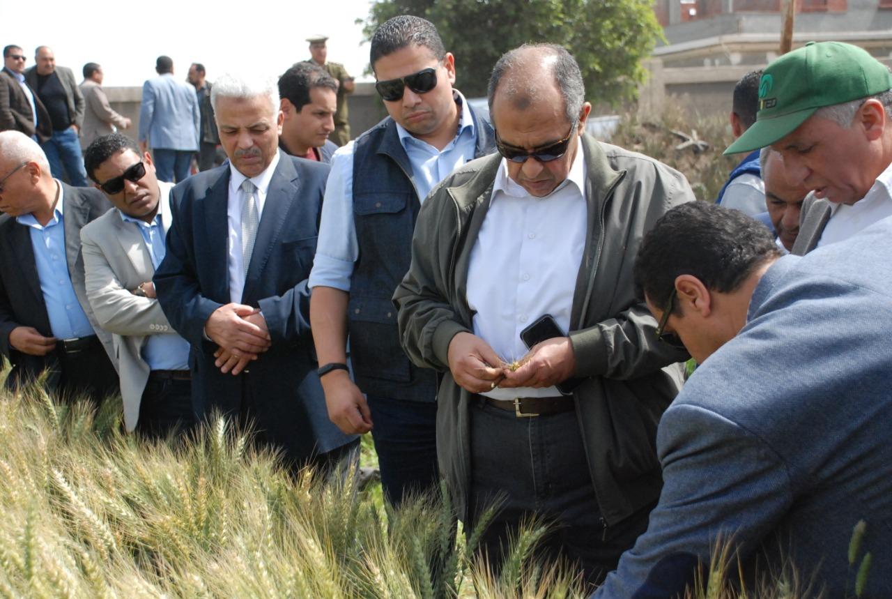 وزير الزراعة يعاين حقول القمح