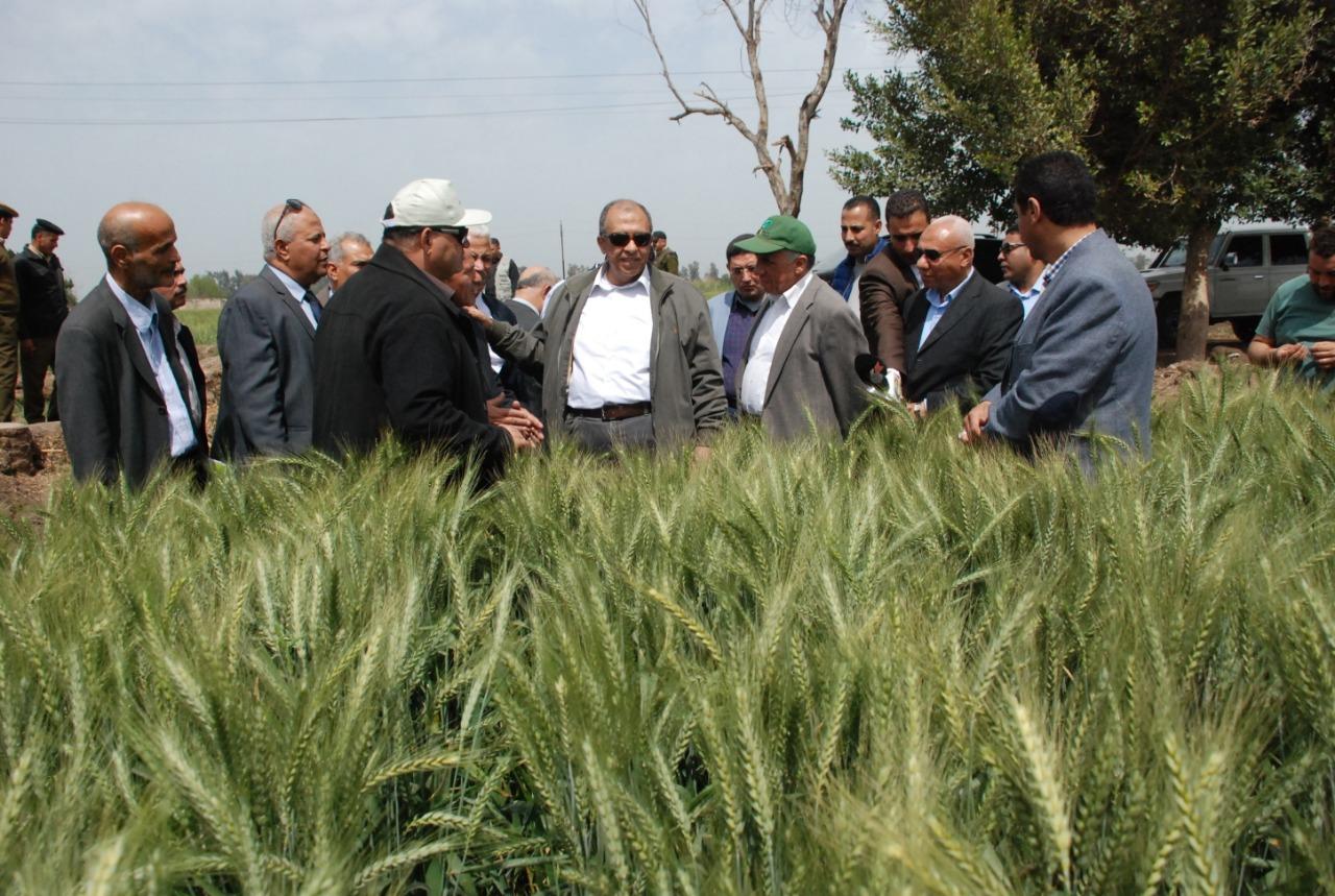 وزير الزراعة يطمئن على محصول القمح