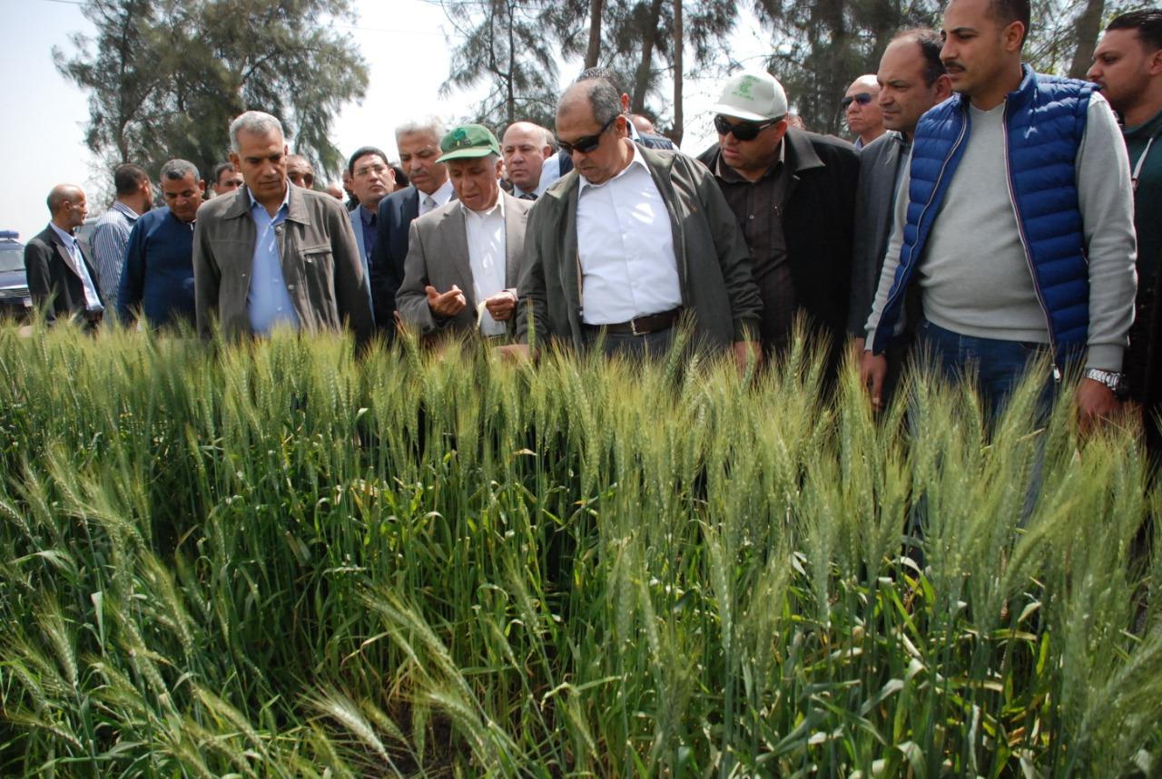 جولة وزير الزراعة فى حقول القمح