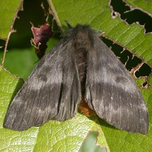 40-burning-moth