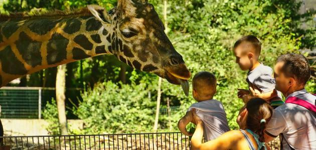 موضوع_عن_حديقة_الحيوانات