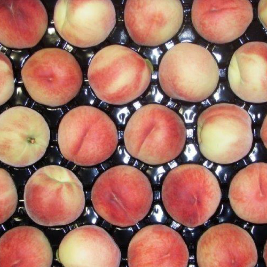 White-Flesh-Peach