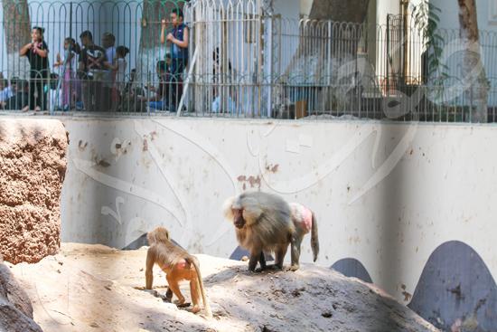 حديقة الحيوان (18)