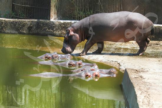 حديقة الحيوان (15)