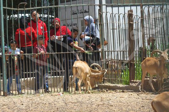 حديقة الحيوان (14)