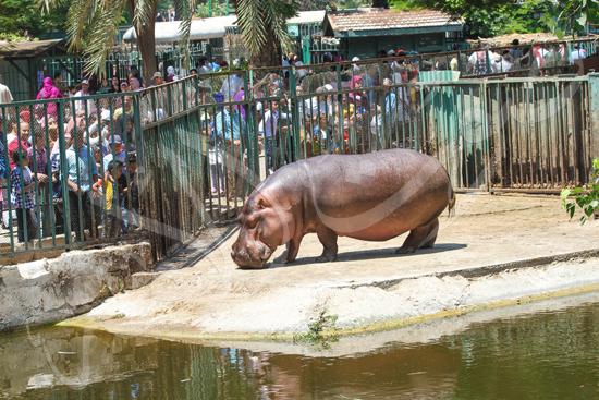 حديقة الحيوان (13)