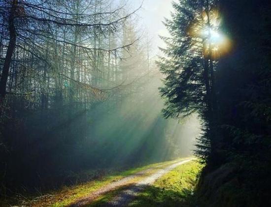غابة هامسترلي
