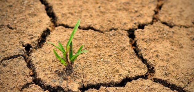 التصحر يزحف إلى الحياة النباتية