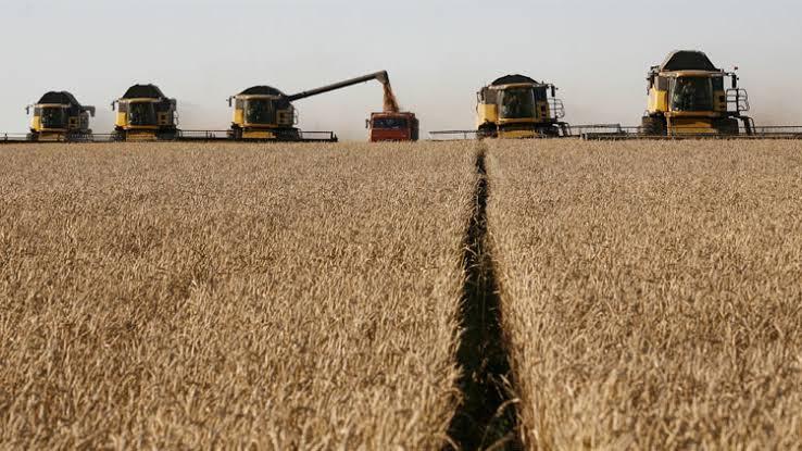 زراعة القمح فى أمريكا