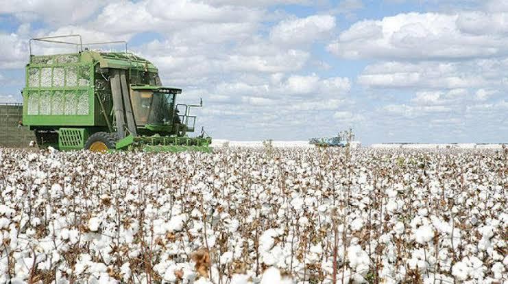 زراعة القطن فى الولايات المتحدة الأمريكية