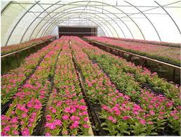 النباتات الطبية والعطرية تحتاج إلى الدعم الحكومى