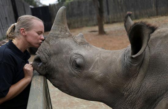 ناشط يقبل حيوان وحيد القرن