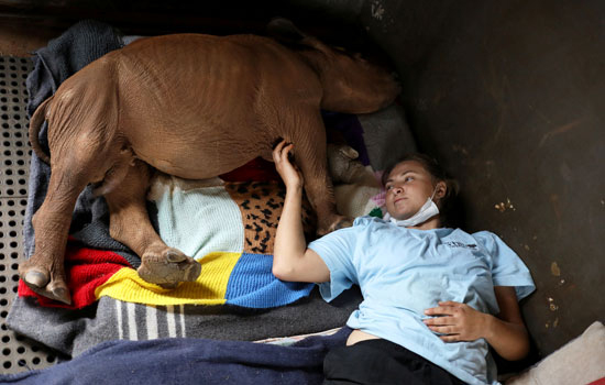 ناشط مع وحيد القرن