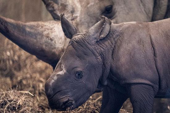 توقف السياحة البيئية كارثة كبيرة للاقتصاد فى جنوب إفريقيا