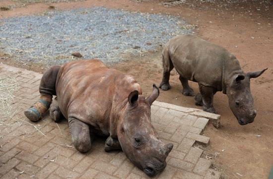 الحيوانات البرية فى خطر