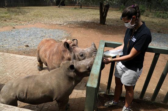 حملات كبيرة لحماية الحيوانات البرية من الانقراض
