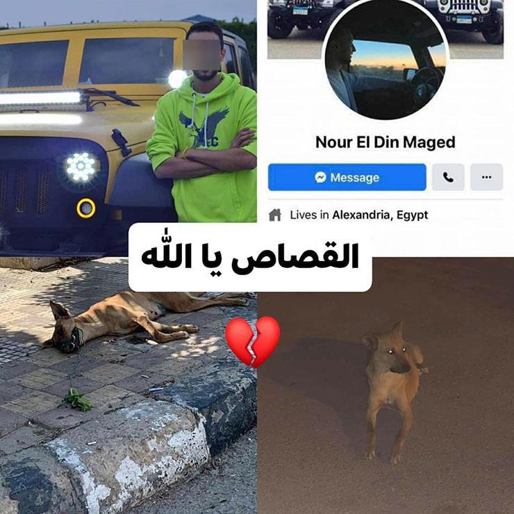 المتهم بسحل كلب في الإسكندرية