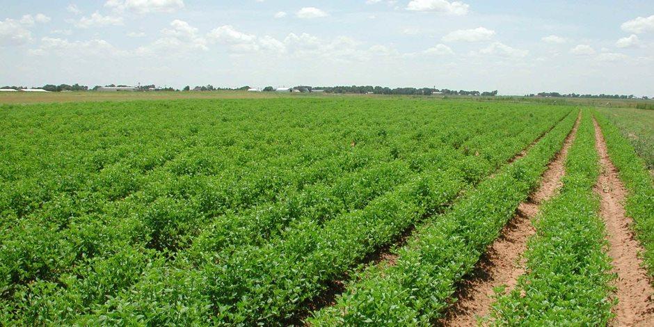 الإدارية العليا: حظر تملك الأجانب للأراضى الزراعية
