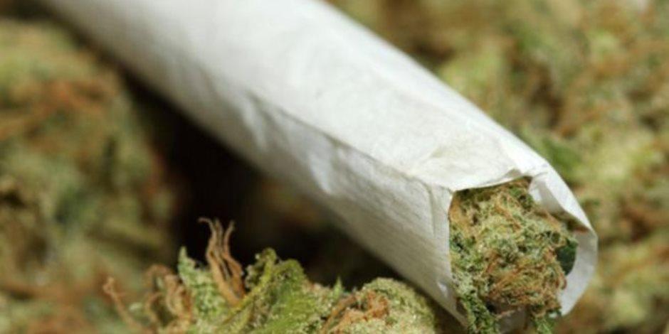 دراسة: احتواء الماريجوانا على مركب كيميائى يمنع نوبات الصرع بين الأطفال والشباب