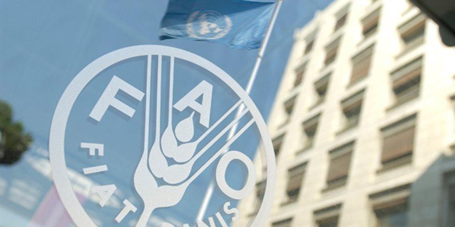 «الأمم المتحدة» للأغذية والزراعة: مصر نجحت في زيادة إمدادات الغذاء على المستوى الوطني