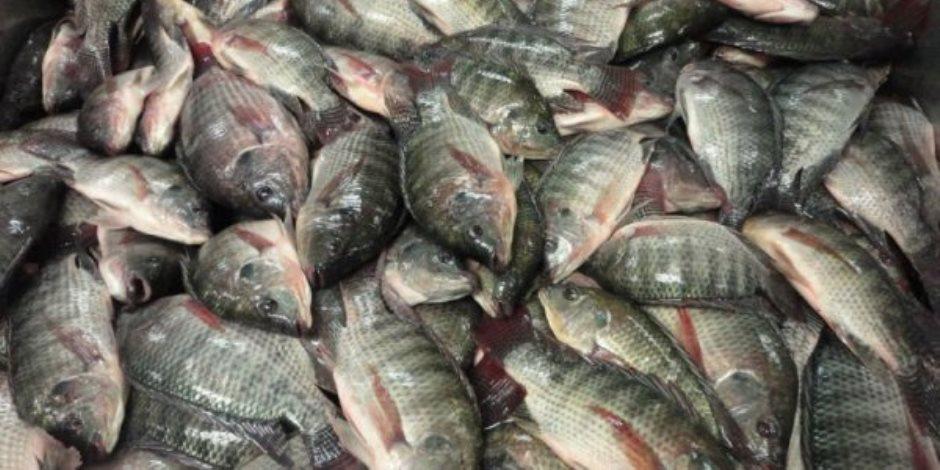 جهاز الإحصاء: 51 مليون دولار فاتورة استيراد الأسماك عام 2019