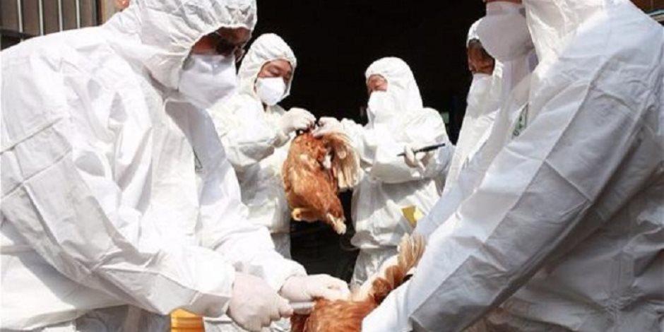 الصين تعلن انتشار انفلونزا الطيور في مزارع دواجن في مدينة هكسيان